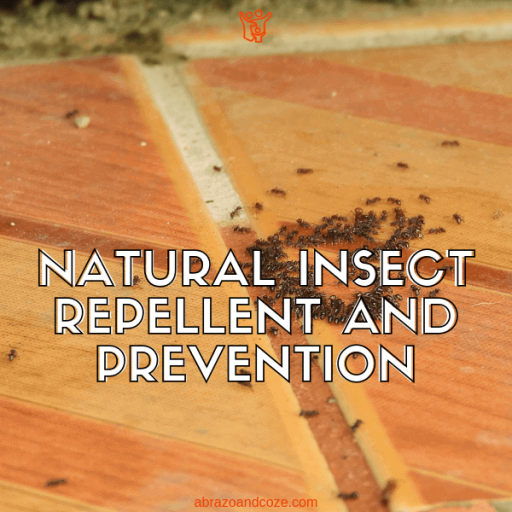 Nobody likes to find bugs in their homes, like these ants feasting on a countertop spill. Natural insect repellent will get them out of your home, without the poisonous chemicals found in regular pesticides.